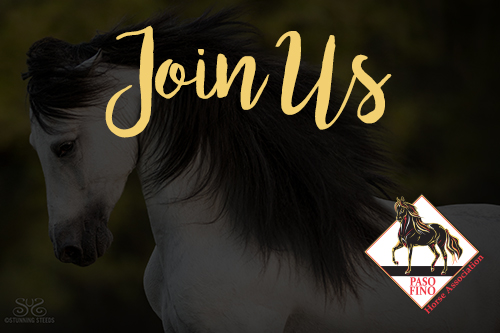 Join the Paso Fino Horse Association