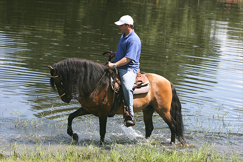 Recreational Horse Rider